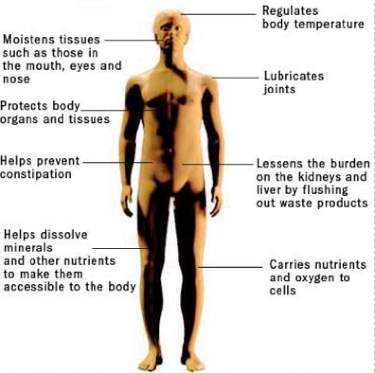 effect of hydration